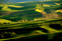 Green Palouse 0214 Washington State